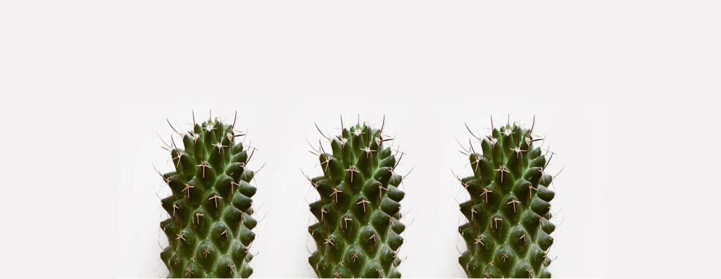 Image of 3 cactus referring to poor communication